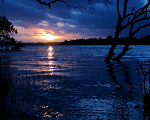 "Sunset on the Mangroves  ""Blue"""