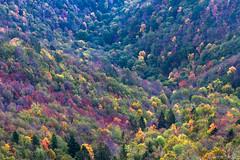 Autumn Forest (Irene Becker) Tags: autumn tree fall colors forest landscape serbia autumnleaves balkan jesen taramountain centralserbia mygearandme mygearandmepremium mygearandmebronze mygearandmesilver taraplanina taranacionalnipark jagotica biljeskastena serbianlandscapes