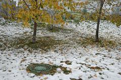 Moscow. (Rina Boyan) Tags: park street city autumn trees urban snow color tree green nature colors beautiful beauty digital photography nikon photos russia moscow unlimited silhoutte moskva россия pfoto pointillisme streetphotografy unlimitedphotos rinaboyan