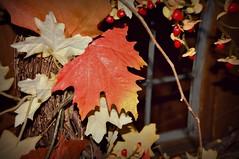 Welcome (Doug Wallick) Tags: door autumn window front wreath welcome lightroom a55 picmonkey