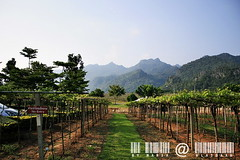 KhaoYai view by มาเรีย ณ ไกลบ้าน_G7202358-002