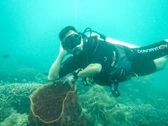 Amazing Philippine coral reef! (julesnene) Tags: travel marine bluewater diver coron corals muta underwaterphotography wreckdive wreckdiving xestospongia coronbay giantbarrelsponge julesnene calamiangroup juliasumangil philippinecoralreef calamianesgroupofislands canonpowershotd20 lusonggunboat sangatislanddiveresort padicerified aldoreymabalotmd