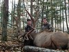 1Quebec Elk & Red Stag Hunt 61