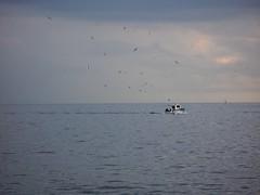 Il ritorno (RoBeRtO!!!) Tags: sea sky bird water clouds barca mare nuvola lovely1 seagull cielo fishingboat acqua pesca gabbiano uccello marenostrum peschereccio rdpic canong7