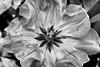 Plant at  Descanso Garden (FS_photos) Tags: california ca camera canon blackwhite 300d botanic canonrebel pasadena botanicgarden descansogarden 28135mmis 02category 01equipment