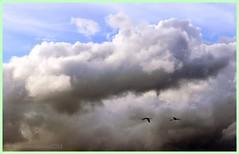 Verso le nuvole (RoLiXiA) Tags: sardegna clouds nuvole sardinia cagliari sardaigne cerdeña fenicotteri stagno macchiareddu zoneumide assemini nikond90 stagnodisantagilla