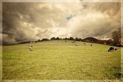 Majada (EnriqueAparicio) Tags: naturaleza nature nikon natura nubes campo enrique vacas navarra d700 basaburua comunidadforaldenavarra enriqueaparicio