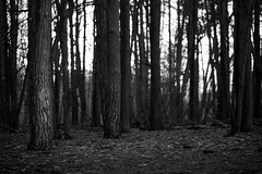 (Paul J Coles) Tags: wood trees sunset blur tree wednesday print bokeh recentwork topublish
