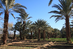 Countryside - south Maroc (LeszekZadlo) Tags: africa trees naturaleza green nature landscape countryside natureza paisaje orchard oasis morocco maroc landschaft