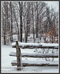 A Snow-Covered Log Fence after a Snowfall (Chantal PhotoPix) Tags: road trees winter snow canada storm cold ice nature pine rural forest woodland landscape outdoors countryside woods seasons country snowstorm frosty cedar lane icestorm evergreens backcountry wilderness snowfall wintersnow blizzard countryroad winterwonderland winterstorm snowytrees winterscape winterscenes snowtrees winterlandscapes ruralroad frozenlandscape wintrylandscape snowcoveredforest