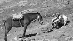 IMG_5941 (Santiago Velsquez) Tags: peru rainbow mountain vinicunca indigenous indigena horse caballo montaa arcoiris cansado tired
