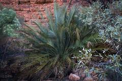 Kings Canyon Northern Territory-19