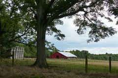 Fence and Farm in Gray Court (FagerstromFotos) Tags: fence fencefriday farm barn red shed tree field barbedwire rural country southcarolina upstate