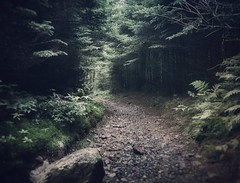 Magical Forest Path (Moments With Brad) Tags: forest photography nature trees statepark tennessee roanmountain travel hiking backpacking