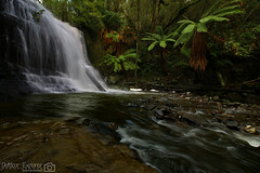 Lilydale Falls (Emily Rainbow-Nordern) Tags: waterfall waterfalls tasmania lilydalefalls photography outdoorexplorer