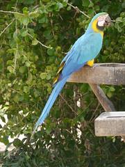 P2230535 (Gareth's Pix) Tags: aviarionacionaldecolombia baru colombia aviario bird