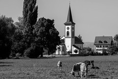 Kirche St. Martin (Max Peter1) Tags: kirche switzerland swiss fuji xpro2 blackwhite beautiful beef