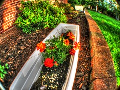 IMG_0016 (74prof) Tags: flowers hdr wideangle