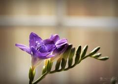 Rutinas (Panthea616) Tags: flores clickanddreamfriends color lagraellavintage catchycolors