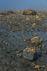 Bar Island (Bar Harbor, Maine) (*Ken Lane*) Tags: geo:lat=4439419721 geo:lon=6820990026 geotagged gouldsboro unitedstates usa acadia acadianationalpark acadianationalparkbarisland acadianationalparkisland attraction awesome barharbor barharbormaine barisland beautiful eastcoast environment gravelbar hancockcounty hancockcountymaine hightide island lowtide maine mdi mountdesert mountdesertisland nationalpark naturallandbridge nature nice nikon northeastatlantic northeastunitedstates northeasternunitedstates outdoor sandandgravelbar sandbar scenicview serene sightseeing tidalisland touristattraction tourists travel travelphotography usnationalregisterofhistoricplaces rock gravel seaweed water