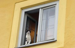 The Sound of Meow (GrisParr) Tags: hellbrunnpalace salzburg austria cat kitty window frame travel yellow europe outdoors animal house palace building mammals facade