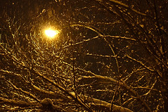 Gathering snow (Bruce Guenter) Tags: lights night snow street winter