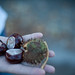 conkers in my hand