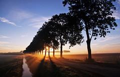 Infinity (betuwefotograaf) Tags: sunset holland netherlands polder geldermalsen gelderland betuwe bomenrij zonsopkomst rumpt rhenoy betuwefotograaf