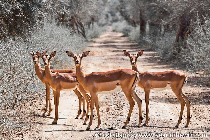 Ndumo Game Reserve - South Africa