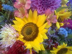 8.1.12 (essentielley) Tags: cameraphone california pink dahlia flowers blue red summer white flower green yellow flora purple farmersmarket sunflower sonomacounty bouquet norcal santarosa wednesdaynightmarket elleinad bestofflowers