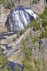 Yellowstone Nat'l Park, WY  Gibbon Falls (imageseekertoo (Wendy Elliott)) Tags: park usa hot us terraces parks national mammoth springs yellowstone wyoming natl geysers