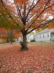 Fall in Kansas (Jonathan (Jay) Koester) Tags: color fall leaves kansas lawrencekansas