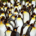 "King Penguins #2 • <a style=""font-size:0.8em;"" href=""http://www.flickr.com/photos/88714479@N07/8093338994/"" target=""_blank"">View on Flickr</a>"
