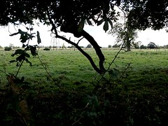 Across the fields (pilechko) Tags: england tree field silhouette landscape lincolnshire crowle