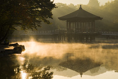(masato_55) Tags: morning mist reflection water zeiss gold pond nikon d600 makroplanar1002zf