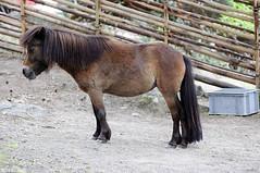 Horse sense in physical form (StarlightHope) Tags: horse animal fence mammal ally pony djur hst ponny staket dggdjur grdesgrd roundpolefence
