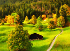 Life goes on.... (ceca67) Tags: autumn mountain alps green nature landscape photography schweiz switzerland photo nikon swiss 2012 d90 ceca67