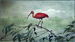 The Scarlet Ibis (Glenda Hall) Tags: holiday plant ontario canada painterly bird texture nature leaves scarlet pose bill october fuji background flight beak feathers ibis creature scarletibis 2012 niagarafall stdavids finpix exr birdkingdom f770 kerstinfrank glendahall creativephotocafe