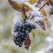 Herbst/Winter in Jena