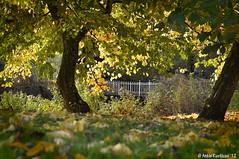 Autumn (Ankie Rusticus, I'm not much here) Tags: park autumn trees bomen herfst leafs sneek bladeren wilhelminaparksneek koninginwilhelminapark