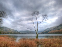 Buttermere tree (GillWilson) Tags: