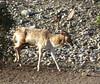 Texas Whitetail Hunt & Exotics - Kerrville 17