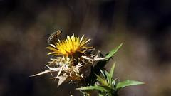 24-105 f4 L macro.. (salico1) Tags: summer macro nature canon eos l makro gezi 24105 seyahat doa ineada 24105lf4 s demirky