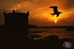 Essaouira (Paki Nuttah) Tags: africa sunset sea orange sun reflection building bird water birds silhouette port dark de la morocco essaouira ville skala spiritofphotography flickrtravelaward