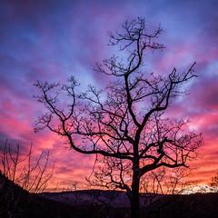 Fractal universe (jeff_006) Tags: winter sunset sky cloud france tree nature landscape branch olympus panasonic fractal f28 omd 1235 em5 flickrsfinestimages1 flickrsfinestimages2 flickrsfinestimages3