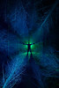 The Green Man (Explore) (Kriegaffe 9) Tags: trees lightpainting green nature silhouette night dark star nikon shadows branches spooky figure greenman d600