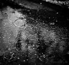 Drop. (Marianna MdC) Tags: roma canon natura drop canon5d acqua pioggia goccia mdc mariannadicori