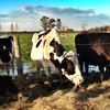 I'm a cow, and I'm looking to you. (Hélder Bernardo) Tags: look animal cow olhar campo cerca palha vaca arame farpado ervas cacia uploaded:by=flickrmobile flickriosapp:filter=nofilter