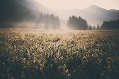I wanted you to be the last thing on my mind (STEPtheWOLF) Tags: morning sunrise daybreak field valley fog sunrays tree forest mountain outdoor mystic faded austria styria seewiesen canon 5d3