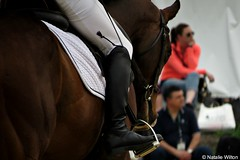Rolex3 (NRJWphotography) Tags: horse thoroughbred bayhorse brownhorse equestrian rolex rolex2016 horsephotography kentucky